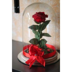"""Rosa Eterna """"La Bella e la Bestia"""""""