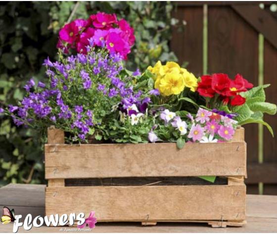 Cassetta in legno con  piante fiorite