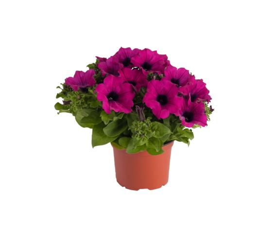 10 piante fiorite a scelta ø14
