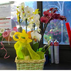 Composizione 3 Orchidee con cesto in vimini