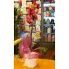 Orchidea con cache pot