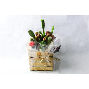 Casseta con piante grasse miste