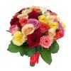 Rose colorate