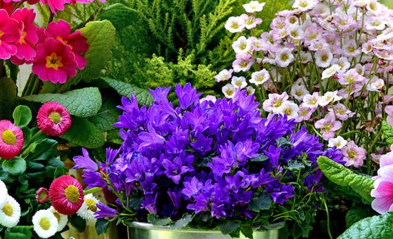 I sette fiori primaverili per eccellenza