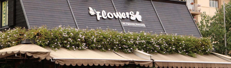Flowers1x