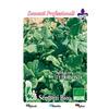 4180 spinacio della nuova zelanda  %28tetragonia spinacio perenne%29