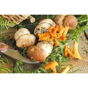 Funghi Porcini Affettati Secchi 400gr.