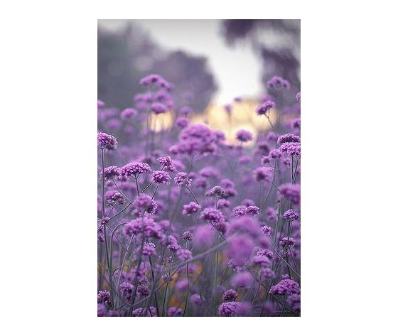 Violetta e muschio millefiori milano