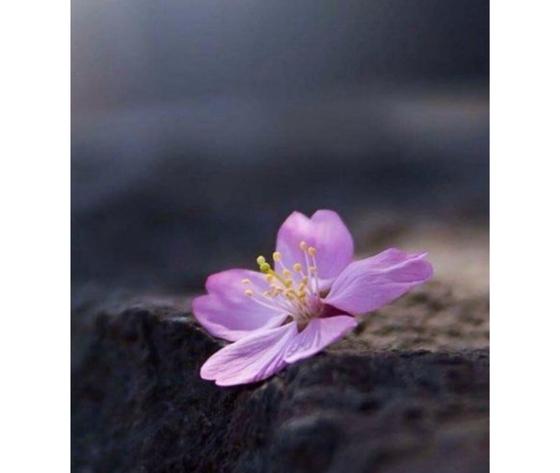 Violetta e muschio