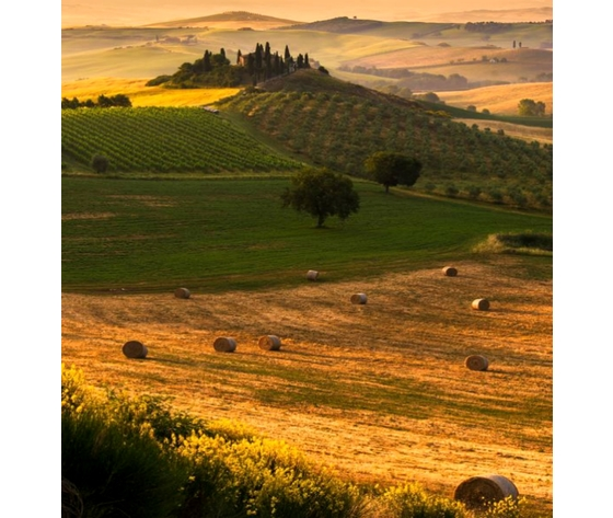 Toscana siena