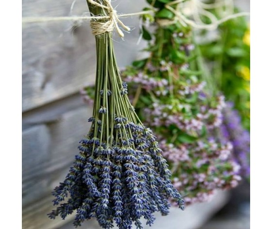 Erbe aromatiche provenzali