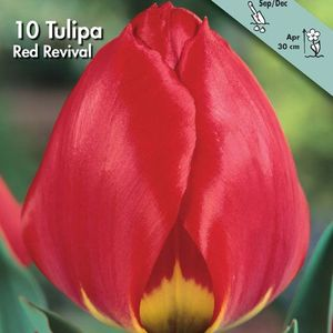 Bulbo tulipano Red revival 1pz