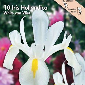 Bulbo Iris White van Vliet 1pz