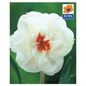 Bulbo Narciso Flowerdrift 1pz