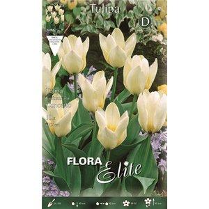 Bulbo tulipano Concerto 1pz.