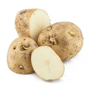 Patata da Seme Kennebec calibro 28/35 10kg.