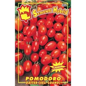 Pomodoro Datter (Sel. Loano)