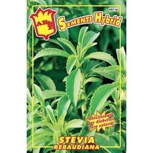 Stevia Rebaudiana Hybrid