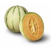 Meloni philibon