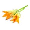 Verdure fiori di zucca