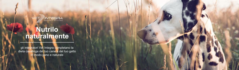 4 dieta casalinga cane