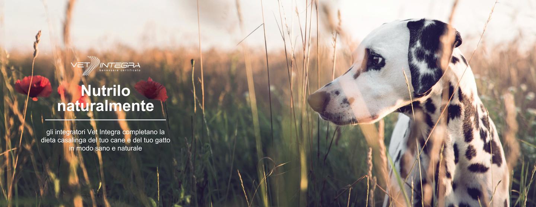 Dieta casalinga cane