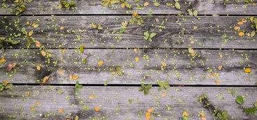 Autumn leaves sale 1300 861 d