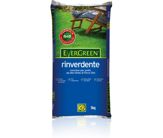 Evergreen rinverdente kg 5