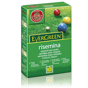 Evergreen Risemina