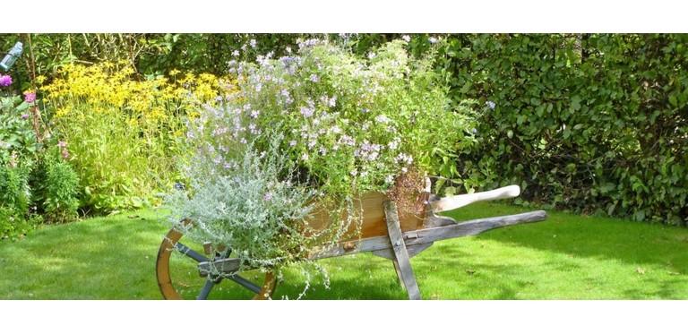 Wheelbarrow flowers nature gardening garden spring summer green 794783