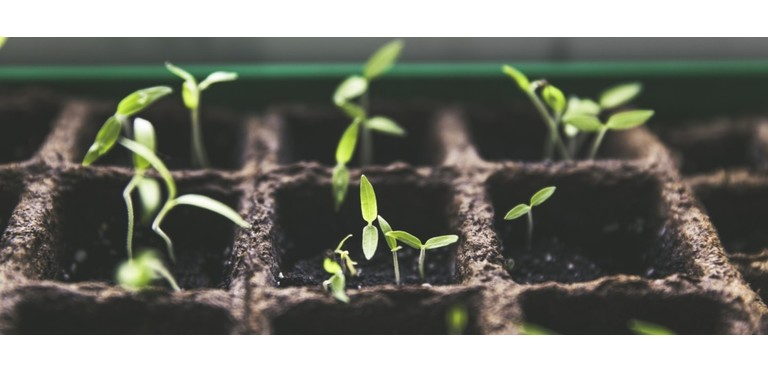 Plant breeding tomato fruit garden home garden harvest green pot culture 599843