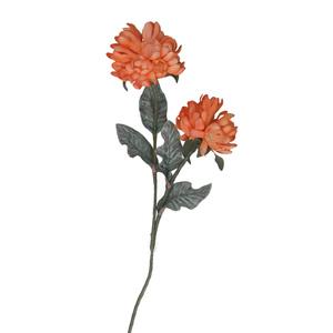 Flora clivia arancio