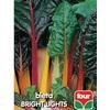 Bieta bright lights f0485 300x450