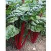 0495 rhubarb chard tk 355x450