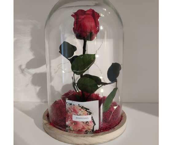 Rosa rossa incanto di jessyjama