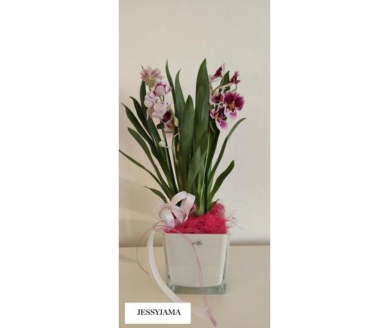 Orchidea miltonia di jessyjama