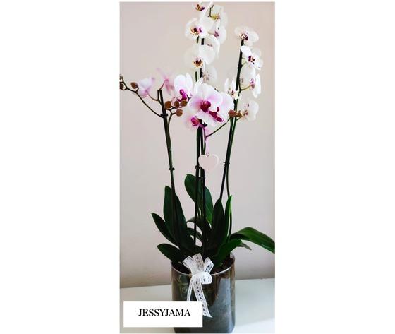 Composizione di orchidee phalaenopsis di jessyjama