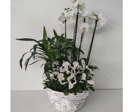 Armoniosa composizione di piante di jessyjama