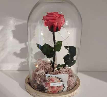 Rosa rosa incanto di jessyjama