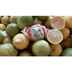 LIMONE PRIMOFIORE di SICILIA (buccia edibile)