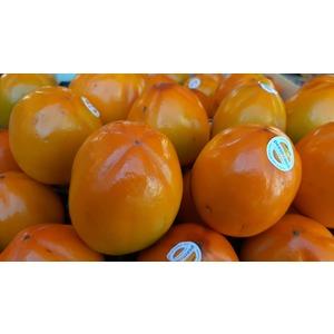 CACHI MELA  (3 frutti)