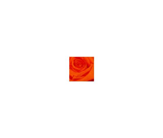 Ros stab stelo b ros stab stelo b o 2