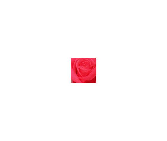 Ros stab stelo b ros stab stelo b f 2