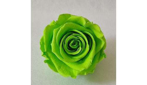 BOX 6 ROSE STABILIZZATE VERDE LIME