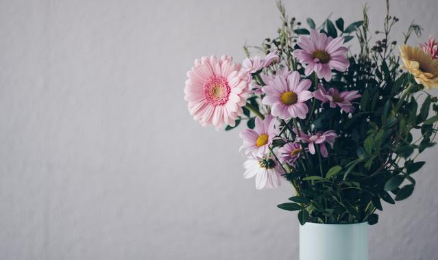 Pink flowers in white vase 1563650