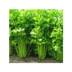 HORTUS Gran Raccolto Zucca Sedano Verde da Taglio