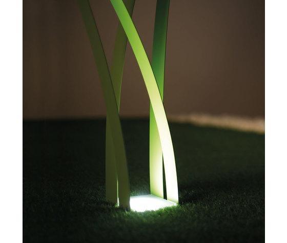 Erba verde 5