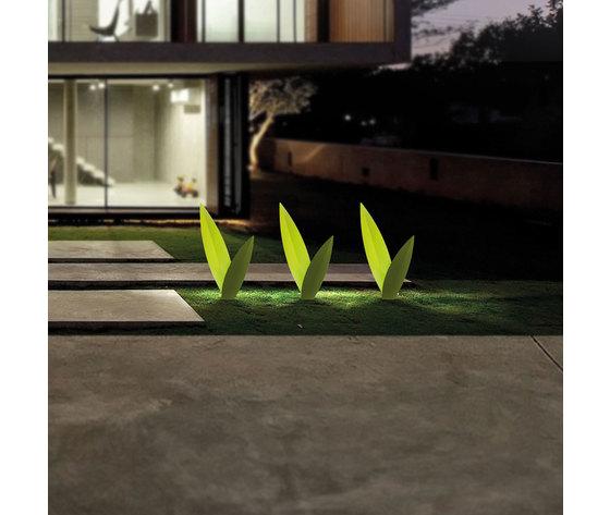 Erba matta verde 5