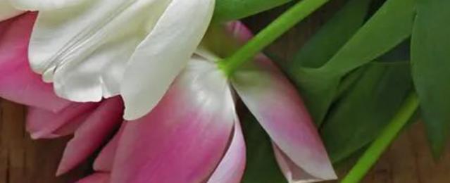 Banner categorie fiori
