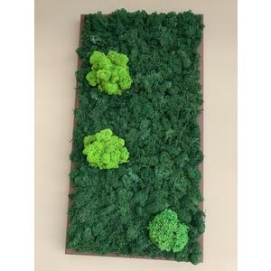 Quadro di lichene Stabilizzato